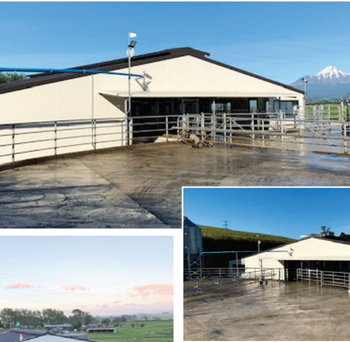 Milking shed or new home, this building firm has it covered